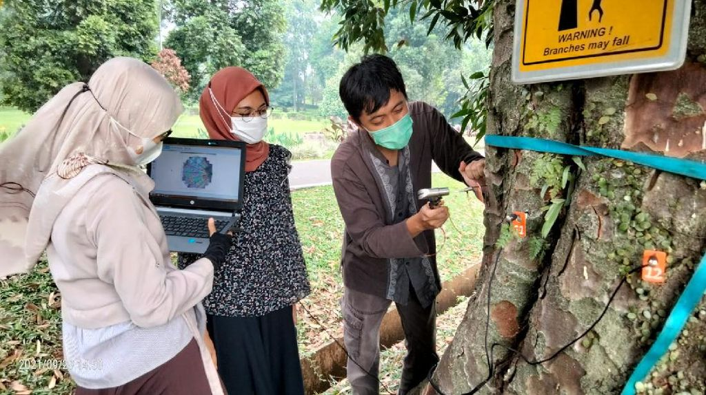Melihat Metode Tim BRIN Cek Kesehatan Pohon di Kebun Raya Bogor