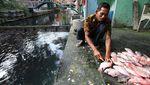 Sungai Jernih di Klaten Ini Dimanfaatkan untuk Budidaya Ikan