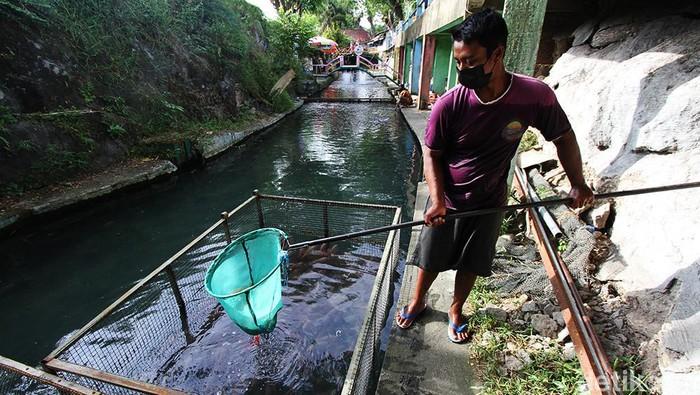 Bagong, warga Desa Pusur, Klaten, Jateng, memanfaatkan aliran sungai yang jernih untuk membudidayakan ikan nila. Dalam sebulan, dia mampu menghasilkan 3 ton nila