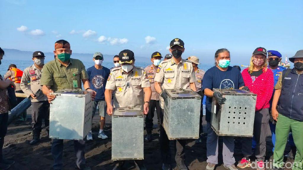 4 Ular Piton dan 40 Kera Ekor Panjang Dilepasliarkan di Pulau Nusa Barong