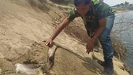 Heboh Fosil di Waduk Saguling, Begini Hasil Penelitian Tim ITB