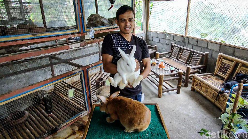 Rezeki Nomplok Peternak Kelinci di Bukit Menoreh Saat Pandemi