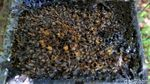 Melihat Budi Daya Madu Lebah Trigona yang Cuan-Ramah Lingkungan
