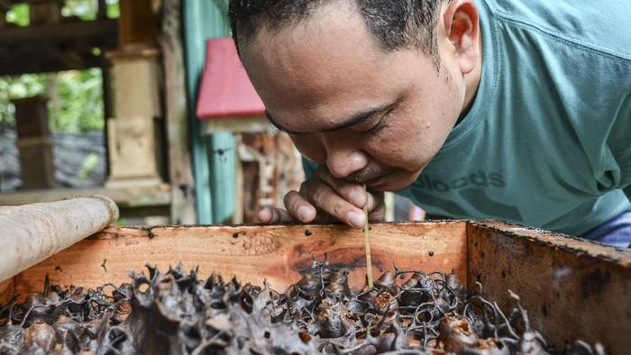 Kelompok Banyu Metu di Kabupaten Pangandaran membudidayakan ribuan koloni teuweul. Lewat budidaya ini warga dapat raup untung mencapai Rp 300 ribu per kilogram.