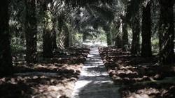 Makin Mesra! RI-Malaysia Lanjutkan Kerja Sama di Bidang Kelapa Sawit