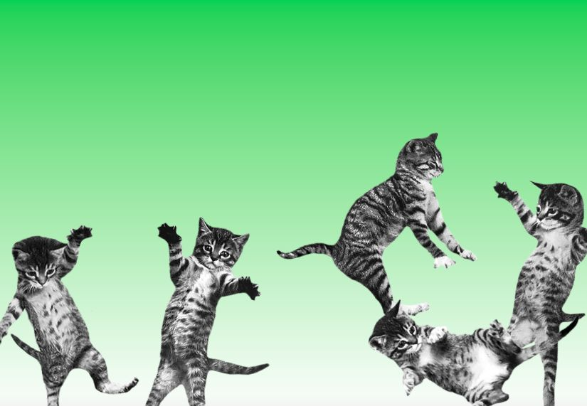 Bounce-cat