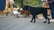 Tempat Viral Ngajak Anjing Jalan-jalan di Tepi Pantai Ala Korea