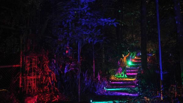 Wisatawan juga bisa menambah ilmu terkait peran hutan di tengah pandemi.