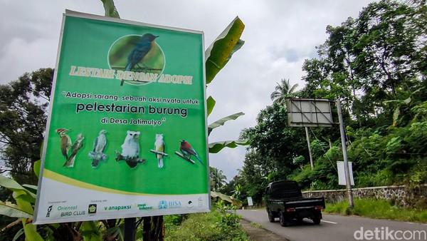Untuk memastikan kelestarian burung di Jatimulyo terjaga, warga di sini juga telah membentuk Kelompok Tani Hutan (KTH) Wanapaksi. Kelompok ini bertugas memantau habitat burung dan mengedukasi masyarakat tentang pentingnya menjaga kelestarian satwa tersebut.(Jalu Rahman Dewantara/detikcom)
