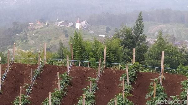 Dengan ketinggian sekitar 1.800 meter di atas permukaan laut. Dusun yang berpenghuni 70 keluarga atau sekitar 210 jiwa ini umumnya bermata pencarian sebagai petani. Seperti namanya  Ngaduman merupakan akronim dari adem dan aman. (Erliana Riady/detikTravel)