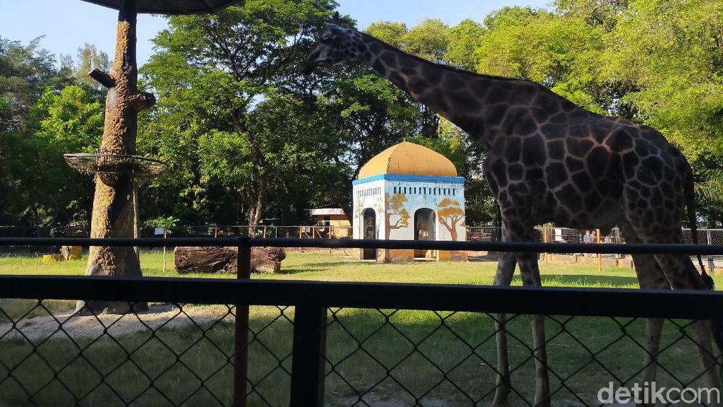 Kebun Binatang Surabaya Dapat 7 Ribu Pengunjung dalam Sepekan