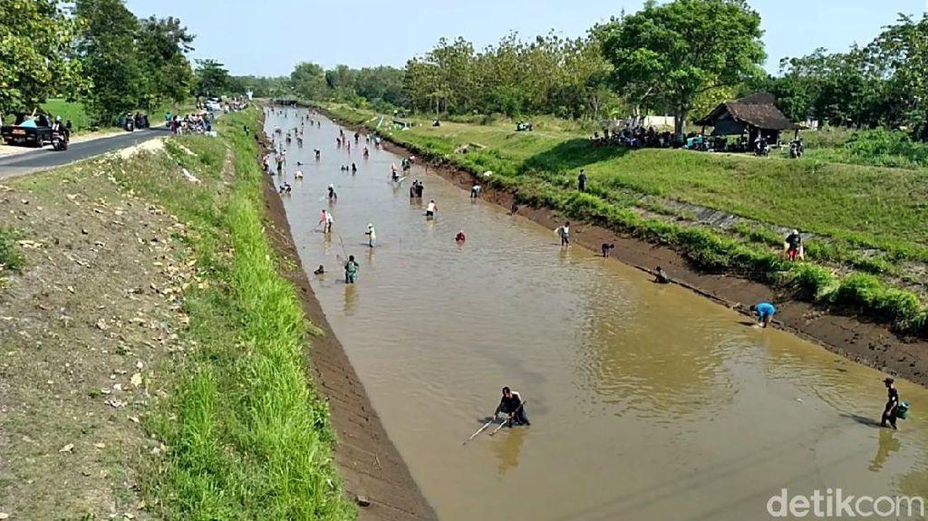 Dam Colo Sukoharjo Ditutup, Warga Tumpah Ruah Ramai-ramai Cari Ikan