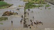 Serunya Warga Sukoharjo Berburu Ikan di Bendungan Colo
