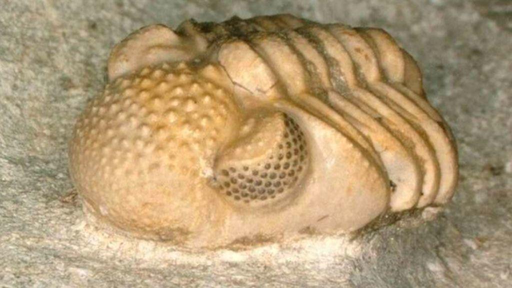 Fosil 300 Juta Tahun Ungkap Hewan Langka yang Punya Ratusan Mata