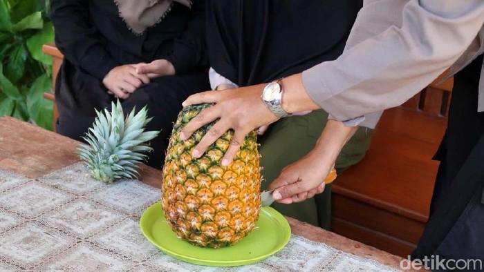 Tri Asih (39) anggota Polsek Sanden, Kabupaten Bantul sukses membudidayakan nanas bagong. Bahkan, saat ini warga sekitar ikut menanam nanas untuk menambah pendapatan.