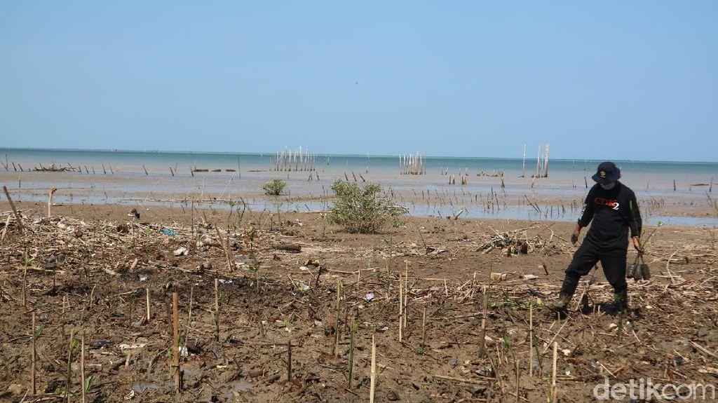Puluhan Kilometer Pesisir Jepara Kena Abrasi, Ada Desa yang Direlokasi
