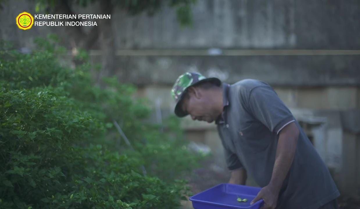 Di Bantaran Kali Ciliwung, Pria Ini Sukses Tanam Oyong dan Singkong