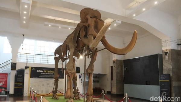 Museum Geologi Bandung sudah dapat beroperasi kembali. Hasil simulasi Dinas Kebudayaan dan Pariwisata (Disbudpar) Kota Bandung, Museum Geologi sudah layak dibuka. Hal tersebut dilihat dari persiapan prokes yang sudah dipersiapkan pengelola.