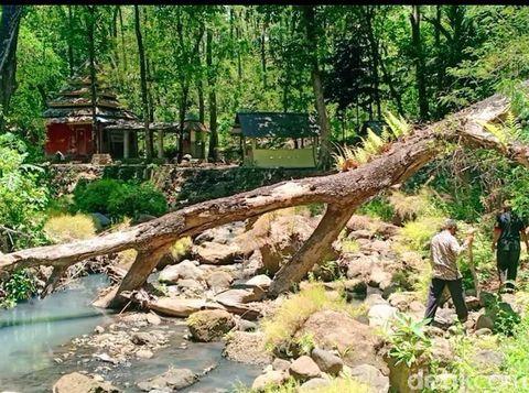 Alas Ketonggo Ngawi seolah tak bisa dipisahkan dengan Gunung Lawu. Bahkan, hutan itu dipercaya sebagai gerbang alam gaib Gunung Lawu.
