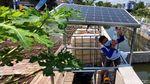 Lebih Irit, Urban Farming di Bandung Pakai Solar Cell