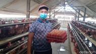 Aksi Borong ASN Jombang Serap 1,6 Ton Telur dari 3 Peternak Lokal