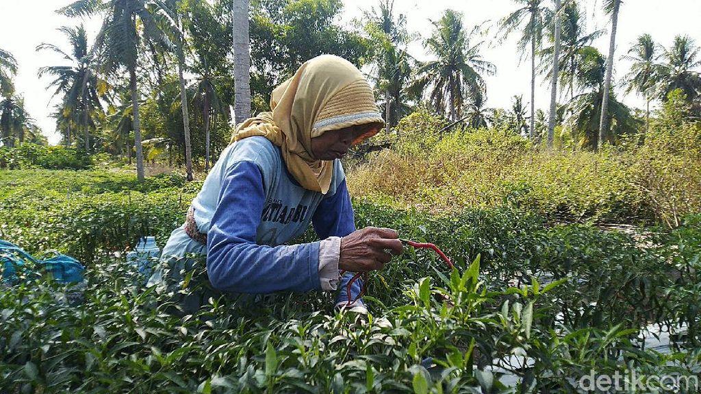 15 Oktober Hari Apa? Ini Serba-serbi Hari Perempuan Pedesaan Internasional