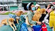 Dikhawatirkan Tertular Corona, Belasan Anjing di Vietnam Dibunuh