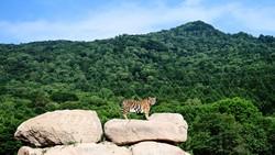 China dan Taman Nasionalnya, Gaji Ranger 0,5 Miliar Rupiah