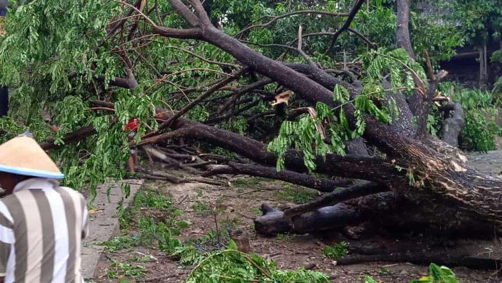 Hujan Disertai Angin Kencang Terjang Parepare, 8 Pohon Tumbang