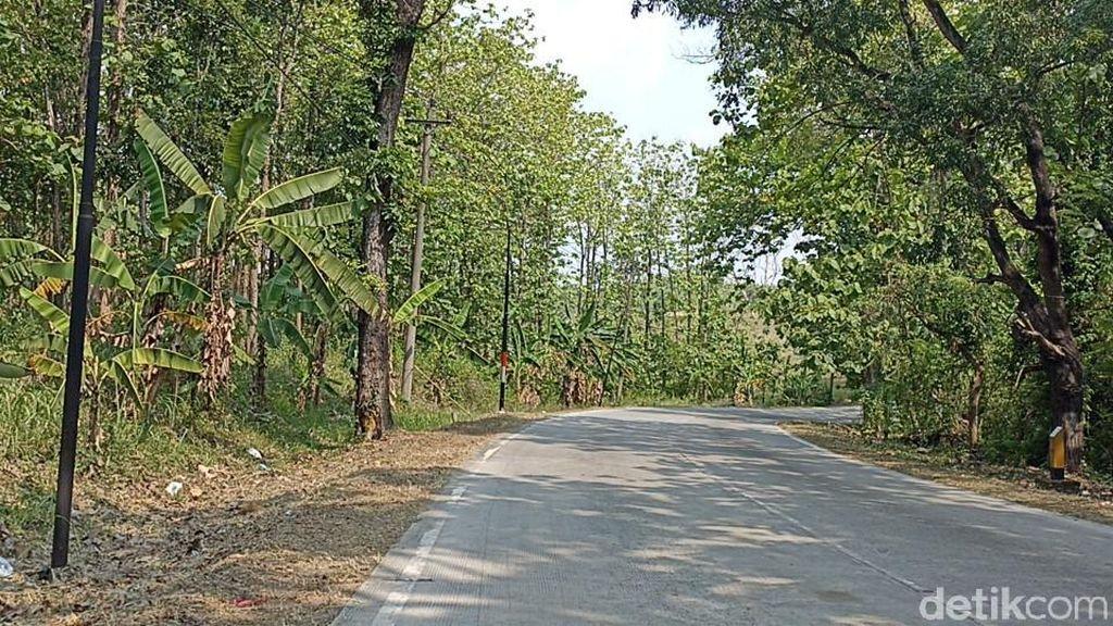 Hutan TKP Mayat Wanita Bugil Ditemukan Ternyata Kuburan Massal PKI Grobogan