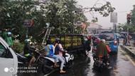 Hujan Angin, Pohon di Bogor dan Sukabumi Tumbang Timpa Mobil-Rumah
