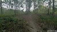 Hutan Kuburan Massal PKI Grobogan Dikenal Angker, Begini Ceritanya