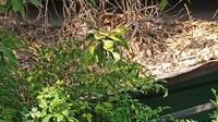 Misteri Tiga Rumah Bekas Pesugihan di Kawasan Bungurasih Sidoarjo