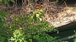 Sensasi Mistis Rumah Pesugihan Sidoarjo, Mulai Bau Tak Sedap hingga Hawa Panas