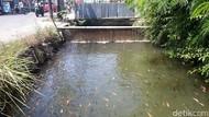 Sulap Selokan Jadi Kolam Ikan, Warga Karanganyar Raup Cuan
