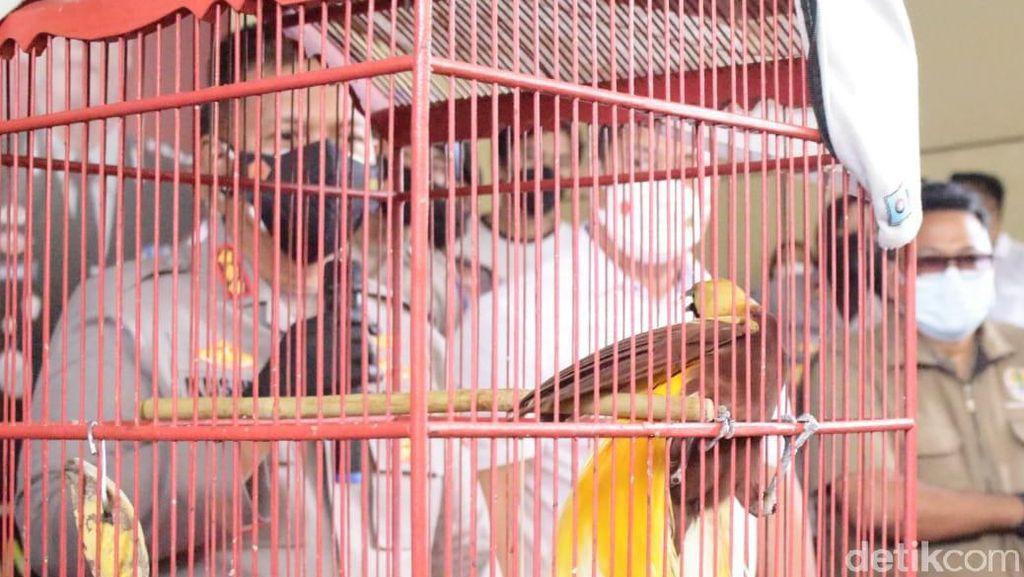 Warga Sidoarjo Ditangkap Karena Dagangkan Burung Cenderawasih