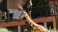 Kembali Dibuka, Kebun Binatang di Sydney Ramai Dikunjungi Warga