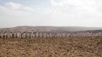 Ratusan Orang Foto Telanjang di Laut Mati