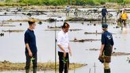 Jokowi Bakal Rehabilitasi 600 Ribu Hektare Hutan Mangrove di Kaltara