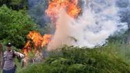 3,5 Hektare Ladang Ganja di Aceh Besar Dimusnahkan