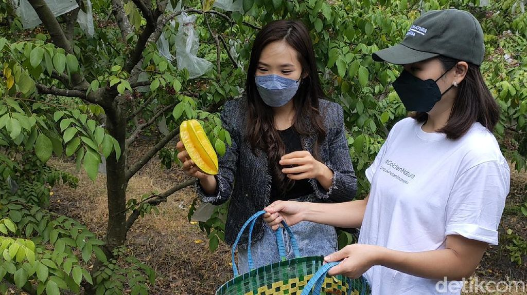 Pasutri di Kediri Ajak Petani Jual Buah ke Luar Negeri dengan Frozen Food