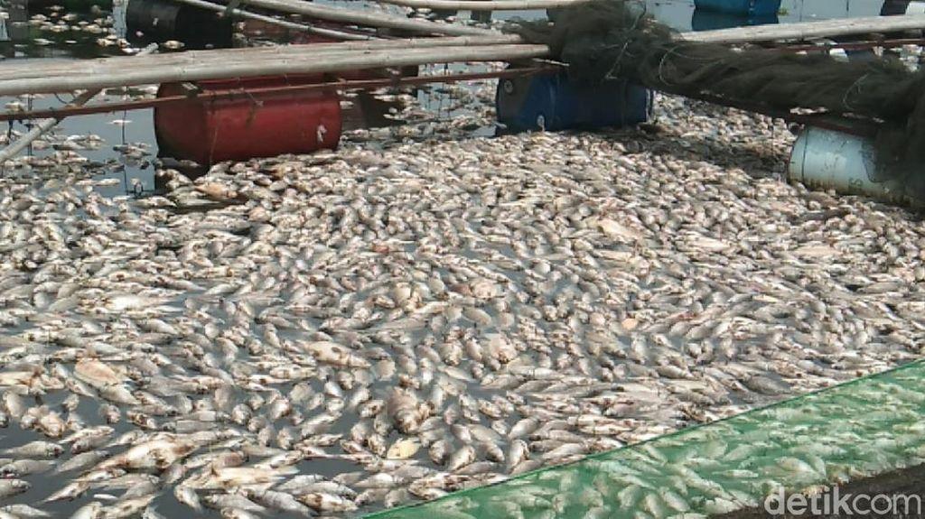 Ikan Mati Massal di Waduk Jangari Cianjur