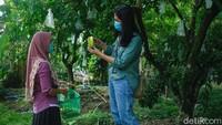 Main ke Agrowisata Tarub Grobogan, Bisa Petik Belimbing dari Pohonnya