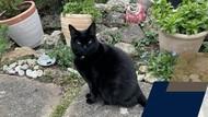 Universitas Oxford Ucap Salam Perpisahan dengan Kucing Kampus, Ada Apa?