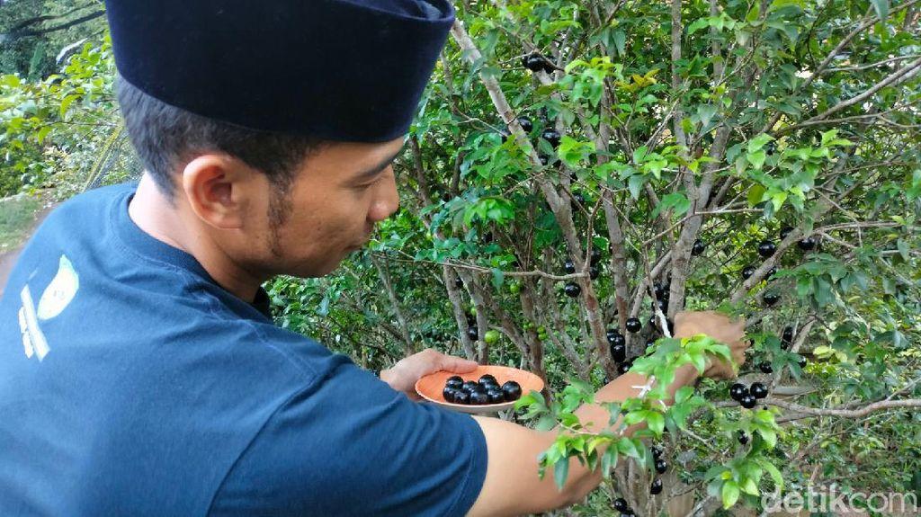 Deden Purbaya, Santri Majalengka yang Sukses Jadi Petani Anggur Brazil