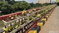 Pot Tanaman Gantung Hiasi Jembatan di Bekasi