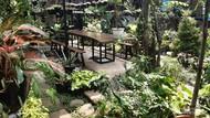 Percaya Tidak, Ada Kafe Sehijau Ini di Jakarta