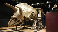 Wow, Fosil Triceratops Terbesar Dunia Dilelang Jutaan Dollar di Paris