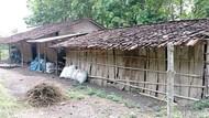 Kisah Guru Berhonor Rp 350 Ribu di Ngawi yang Tinggal Serumah dengan Kambing