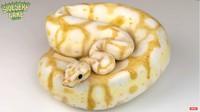 Ngeri! Baker Ini Bikin Kue Bentuk Ular Piton Albino yang Mirip Aslinya